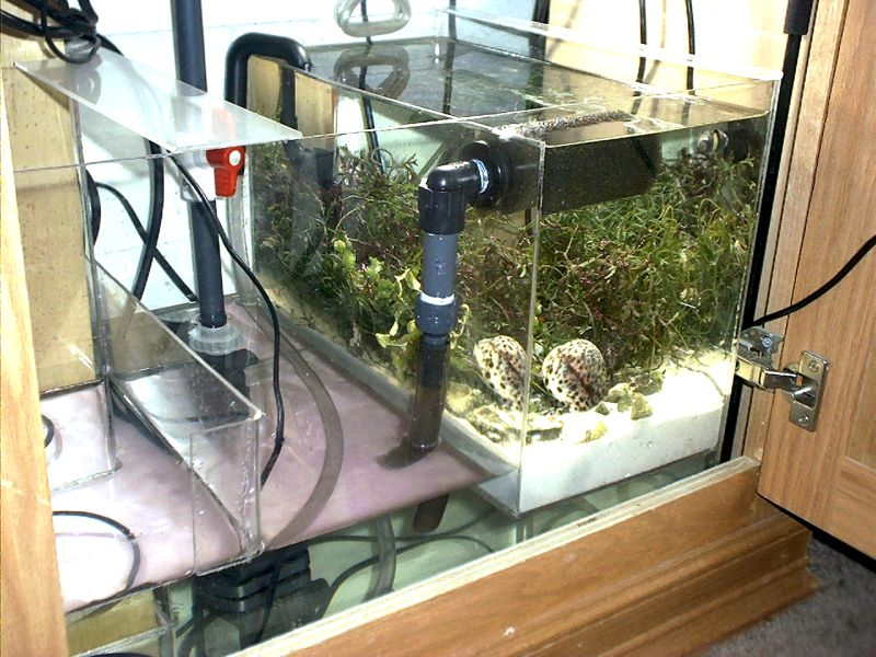 Reef Aquarium Design Ideas