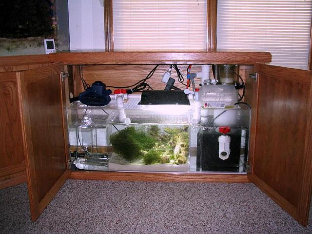Самп в аквариум своими руками
