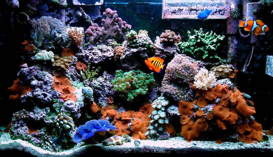 30 gallon saltwater setup 60 gallon saltwater setup 2017 for Aquarium eau de mer