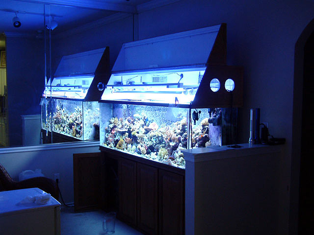 And hereu0027s a canopy that one club member made for his tank using T5 lighting. & Link for DIY canopy with flip open? - Reef Central Online ...