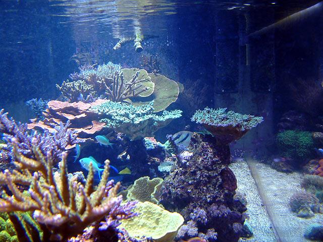 dallis eot - Austin - Dallis & Marcus' 600g reef