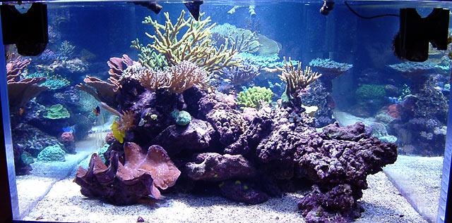 dallis fts2 - Austin - Dallis & Marcus' 600g reef
