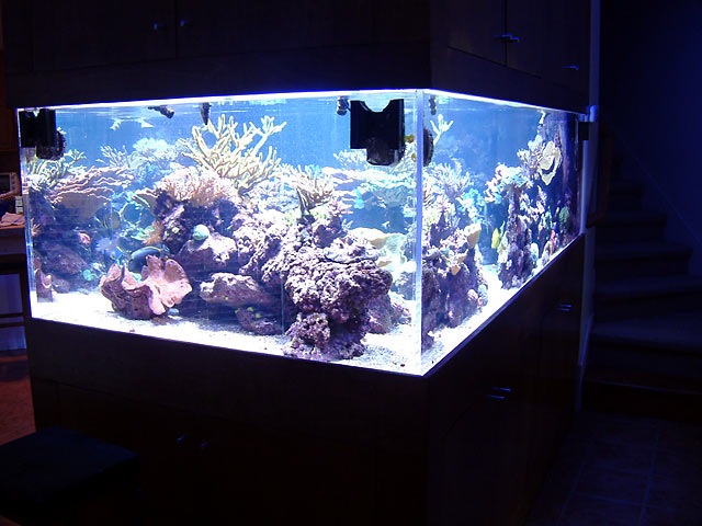 dallis fts4 - Austin - Dallis & Marcus' 600g reef