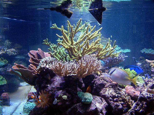 dallis reefshot - Austin - Dallis & Marcus' 600g reef