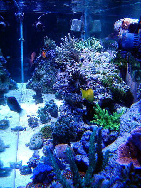 gabriel eot - Austin - Gabriel's 125g reef
