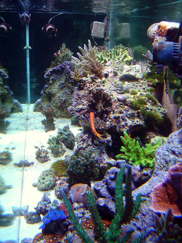 gabriel eot lg - Austin - Gabriel's 125g reef