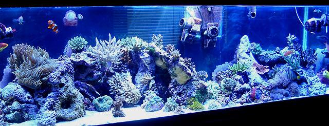 gabriel fts - Austin - Gabriel's 125g reef