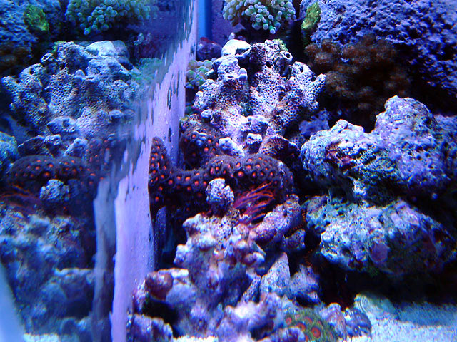 gabriel left side - Austin - Gabriel's 125g reef