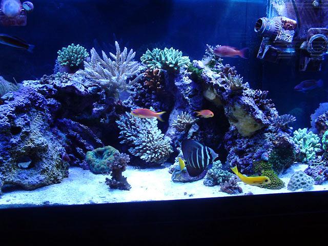 gabriel middle - Austin - Gabriel's 125g reef