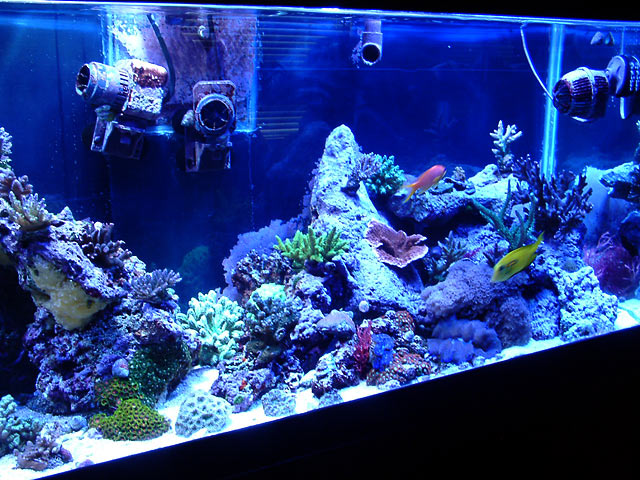 gabriel right side - Austin - Gabriel's 125g reef