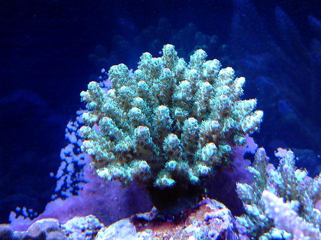 gabriel sarmentosa - Austin - Gabriel's 125g reef
