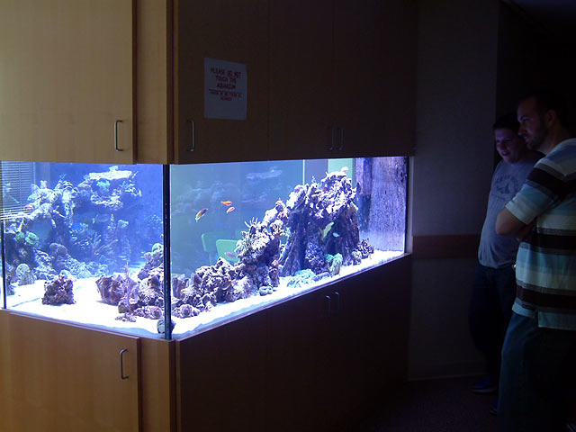 mike fts - Austin - Mike's 450g reef
