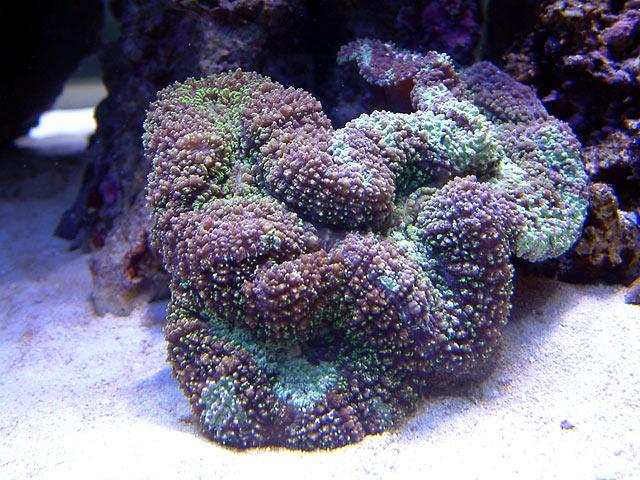 mike lobo - Austin - Mike's 450g reef