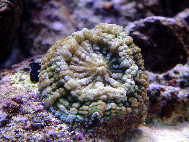 mike lps - Austin - Mike's 450g reef