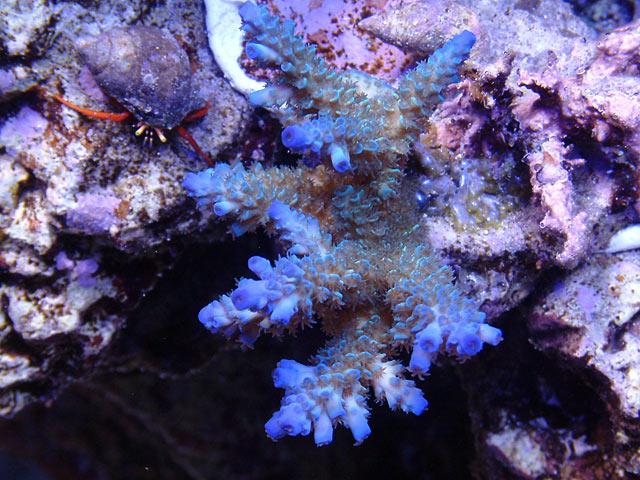 mike milli2 td - Austin - Mike's 450g reef