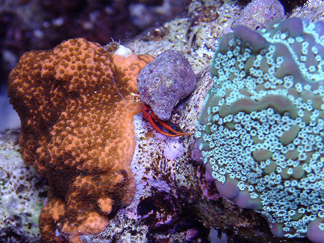 mike monti2 td - Austin - Mike's 450g reef