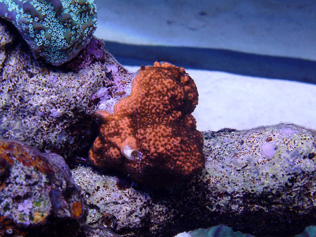 mike monti4 td - Austin - Mike's 450g reef