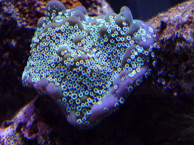 mike monti5 td - Austin - Mike's 450g reef
