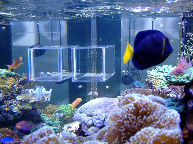 Fish trap aquarium 1000 aquarium ideas for Homemade fish trap