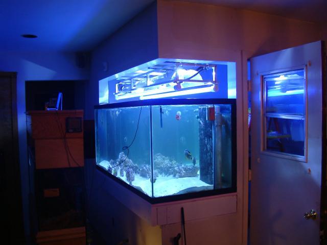 Fish tank doorway blue fish printed japanese noren for Inverted fish tank