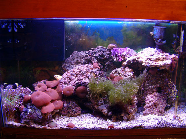 My son's 29g - Reef Central Online Community