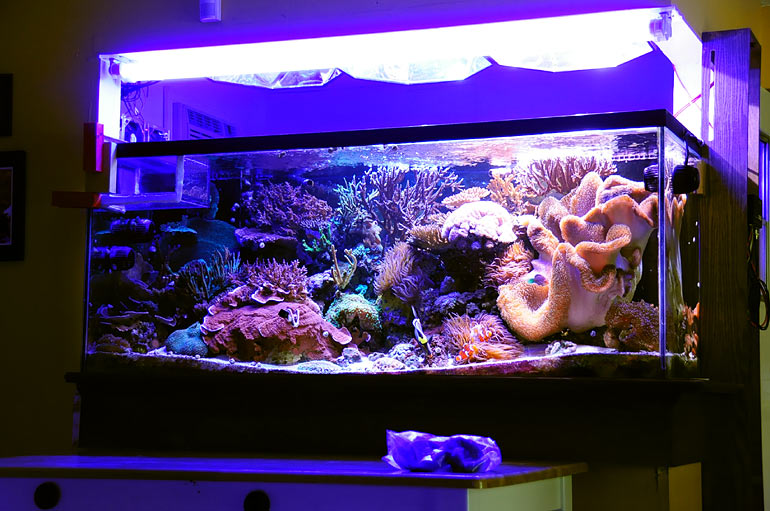 reef addicts the breakdown of my 280 gallon reef tank colonies