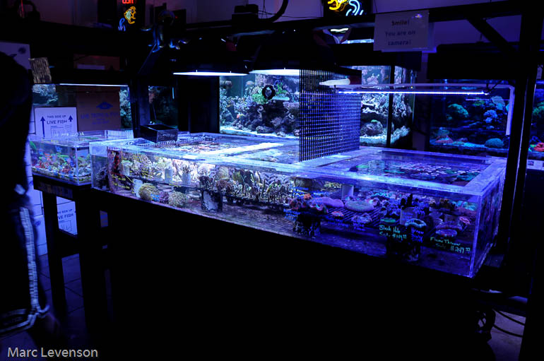 Lfs fish2morow fort worth texas blogs reef addicts for Fish store fort worth