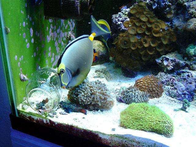 Melev's Mandarin Diner | Melev's Reef