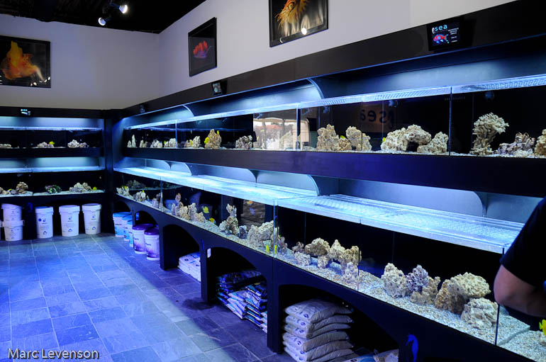 Lfs sea atlanta blogs reef addicts for Salt water fish store