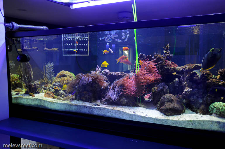 Introducing new fish into an existing set up blogs for Acclimating saltwater fish