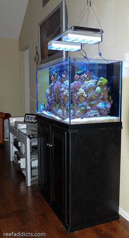 Bobby S Budding Reef Blogs Reef Addicts