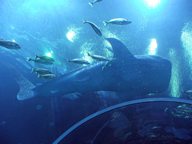 Reef Addicts Want To Be An Intern At The Georgia Aquarium