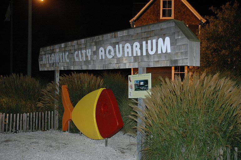 Melev 39 s new 280g starfire tank thread page 8 reef Atlantic city aquarium hours