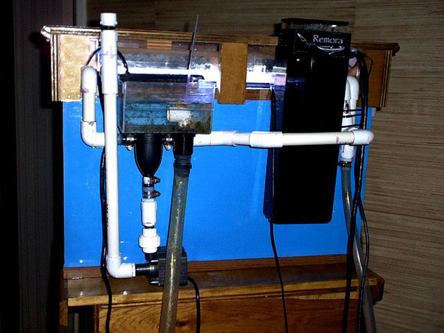 Electricity Cost Saltwater Tank
